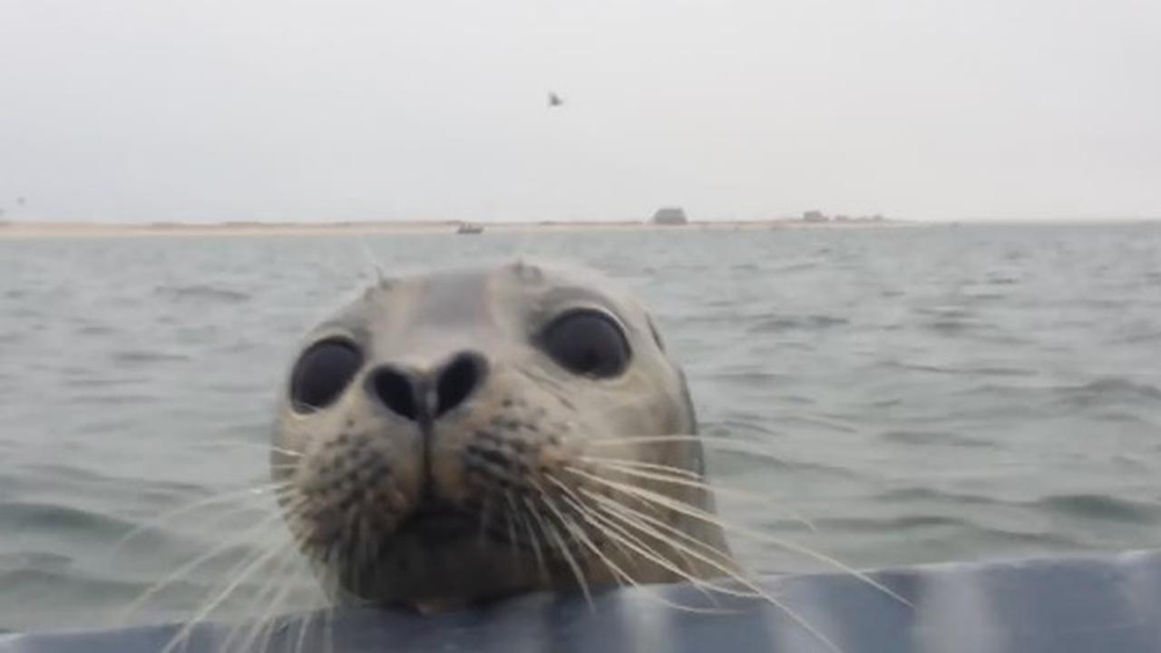 If You're In Seal Territory Expect To Meet Seals