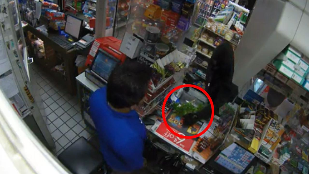 Confusing Moment Man Robs Convenience Store With A Tree Branch