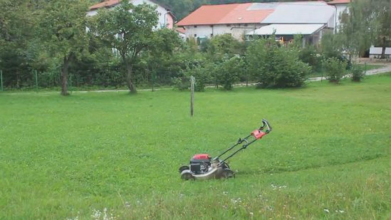 Why Mow The Lawn When It Can Do The Job By Itself?