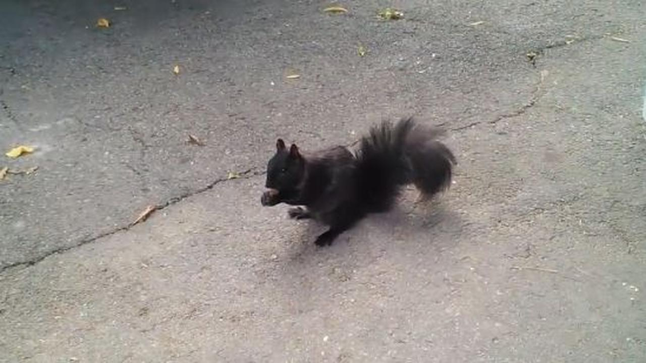 Making A Squirrel Friend