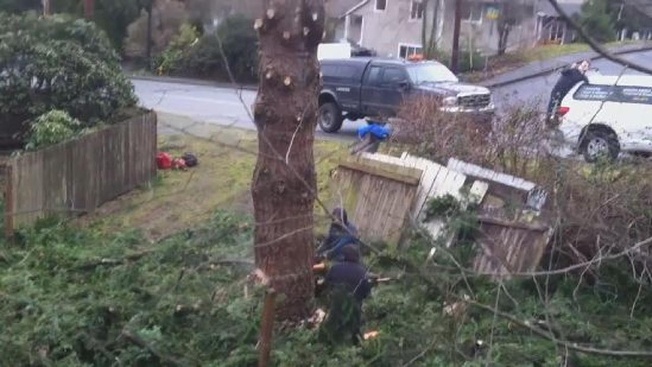Not The Best Way To Remove A Tree