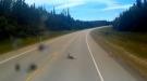 Deer Gets Way Too Close To Tanker Truck