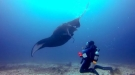 Lending A Hand To A Manta Ray Tangled In Fishing Line