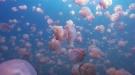 Welcome To Jellyfish Lake