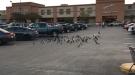 Birds Say Goodbye To A Friend