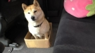 Pranking Your Dog With Boxes