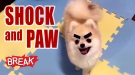 Shock and Paw - Breaking Videos