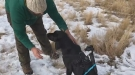 Hunting Dog Gets A Test Run With A GoPro Rig