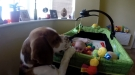This Dog Really Wants That Baby To Play