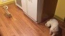 This Rescue Dog Really Doesn't Like To Eat Alone