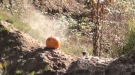 What Happens When You Put An Explosive Target In A Pumpkin?