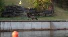 Bald Eagle Hates The Sprinkler
