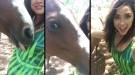 Thirsty Horse Gets Embarrassed After Realizing He's Being Filmed