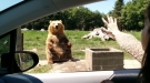 That Bear Has Some Good Reflexes