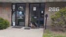 Woman Discovers A Turkey Blocking Her Office Entrance