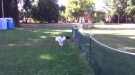 Dog Does Full Front Flip Over Fence And Keeps Going