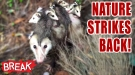 Nature Strikes Back! - Breaking Videos