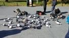 Oblivious Pigeon Is Oblivious