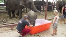 Baby Elephants Love Bath Time