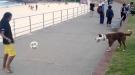That Soccer Dog's Got Skills