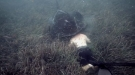 Giant Stingray Takes A Taste Of A Diver's Head