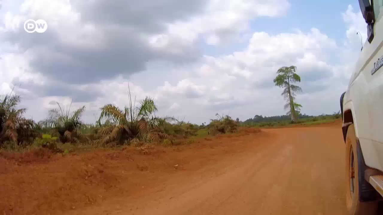 The Price Of Palm Oil In Sierra Leone