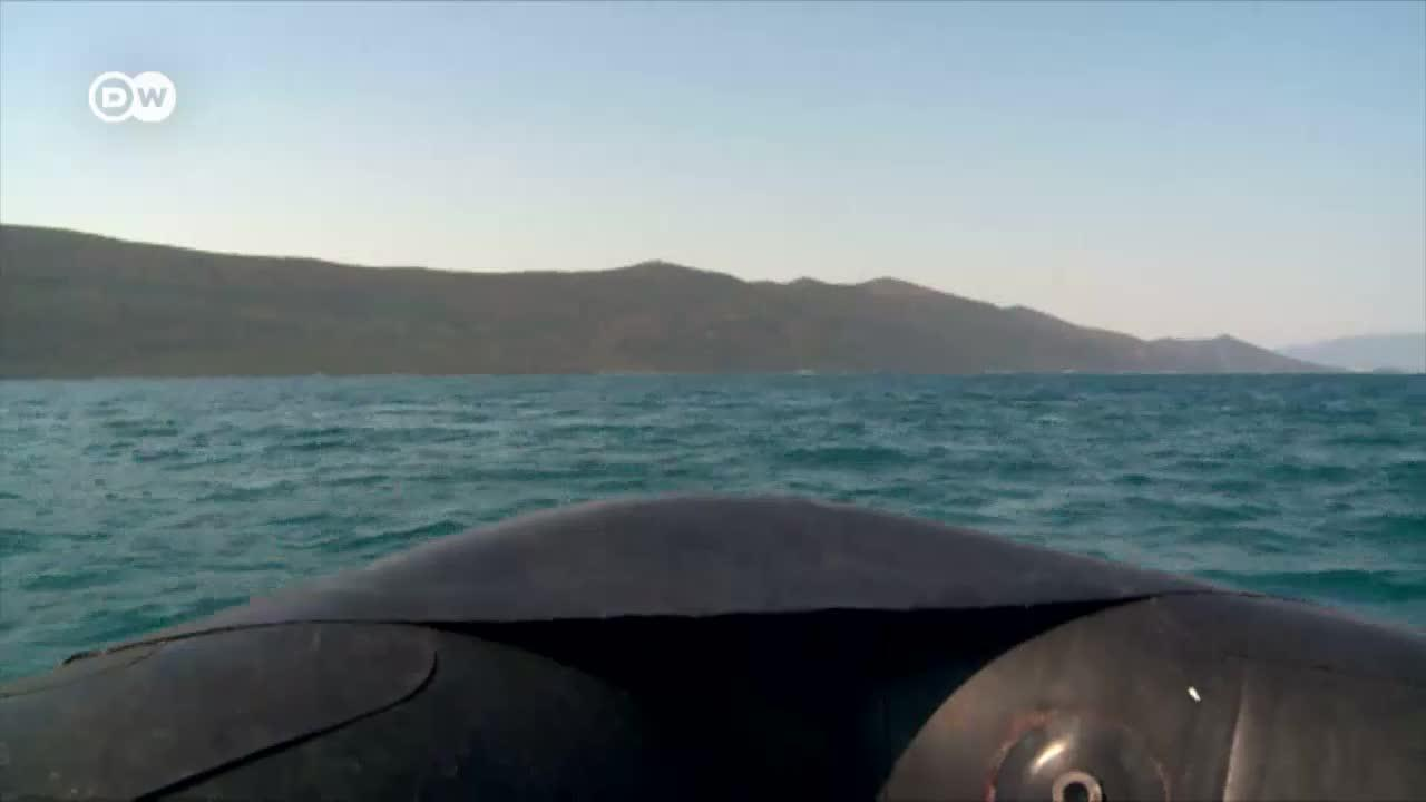 Ailing Rays And Sharks In The Adriatic Sea