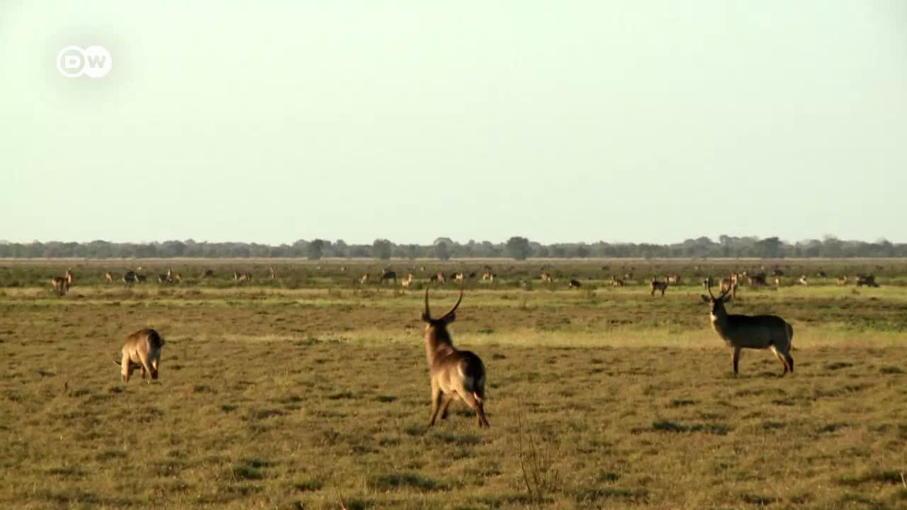Repopulating Wildlife Parks In Mozambique