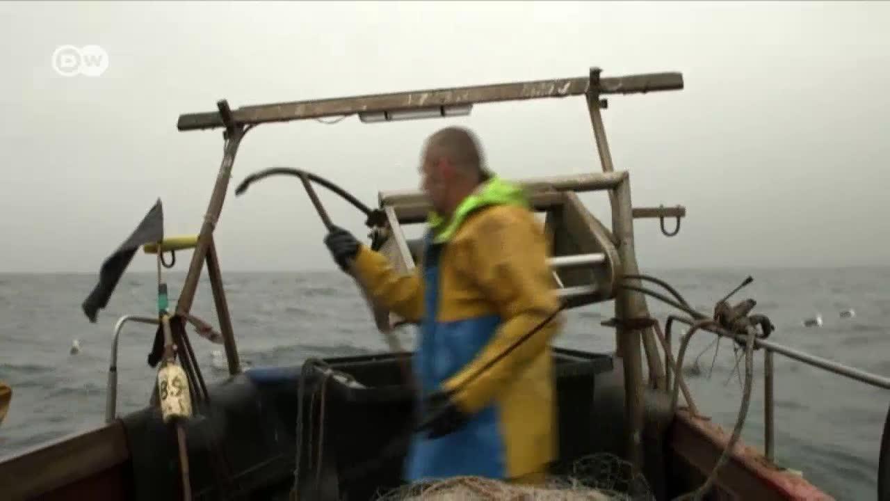 Britain'S Fishing Industry And Brexit