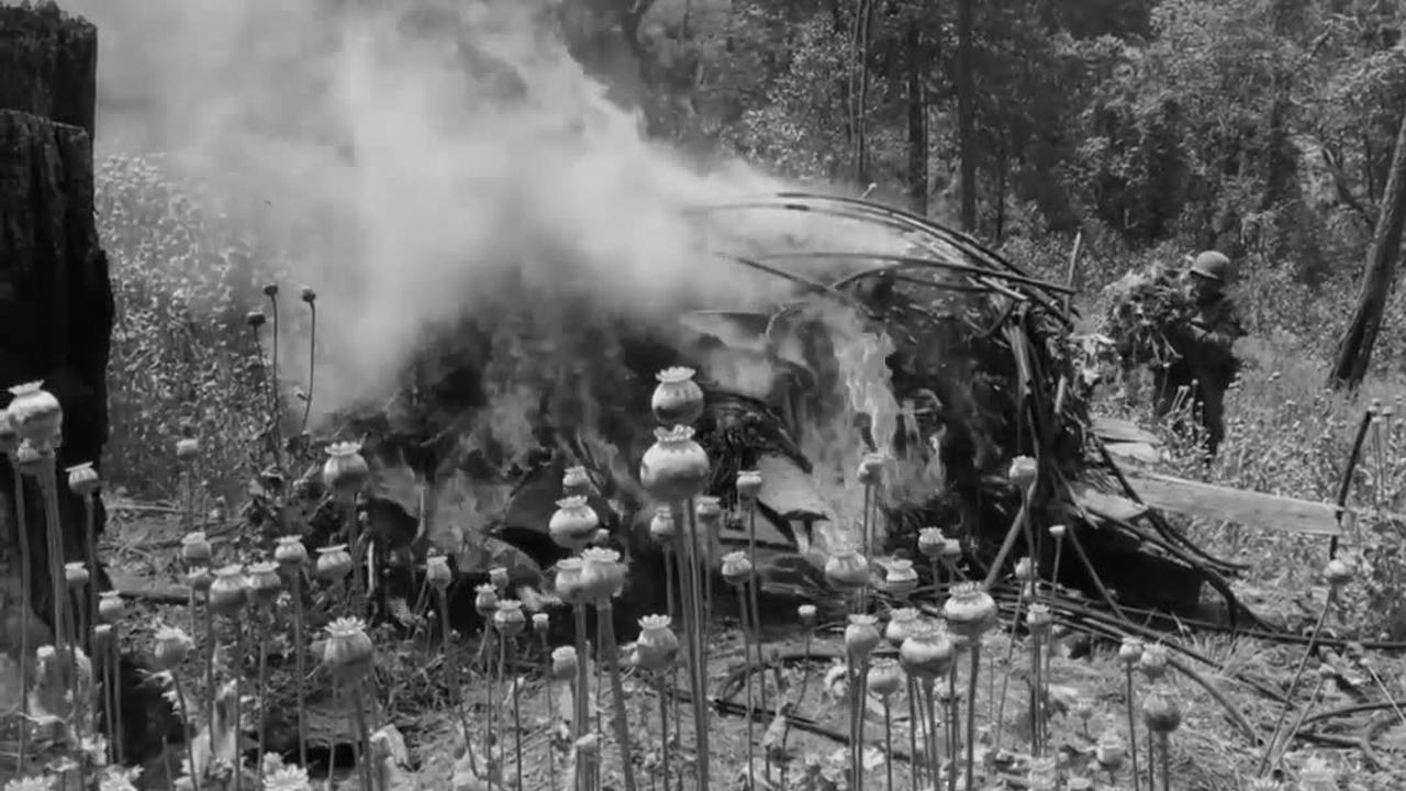 Opium poppies burn in Iyotla, Mexico
