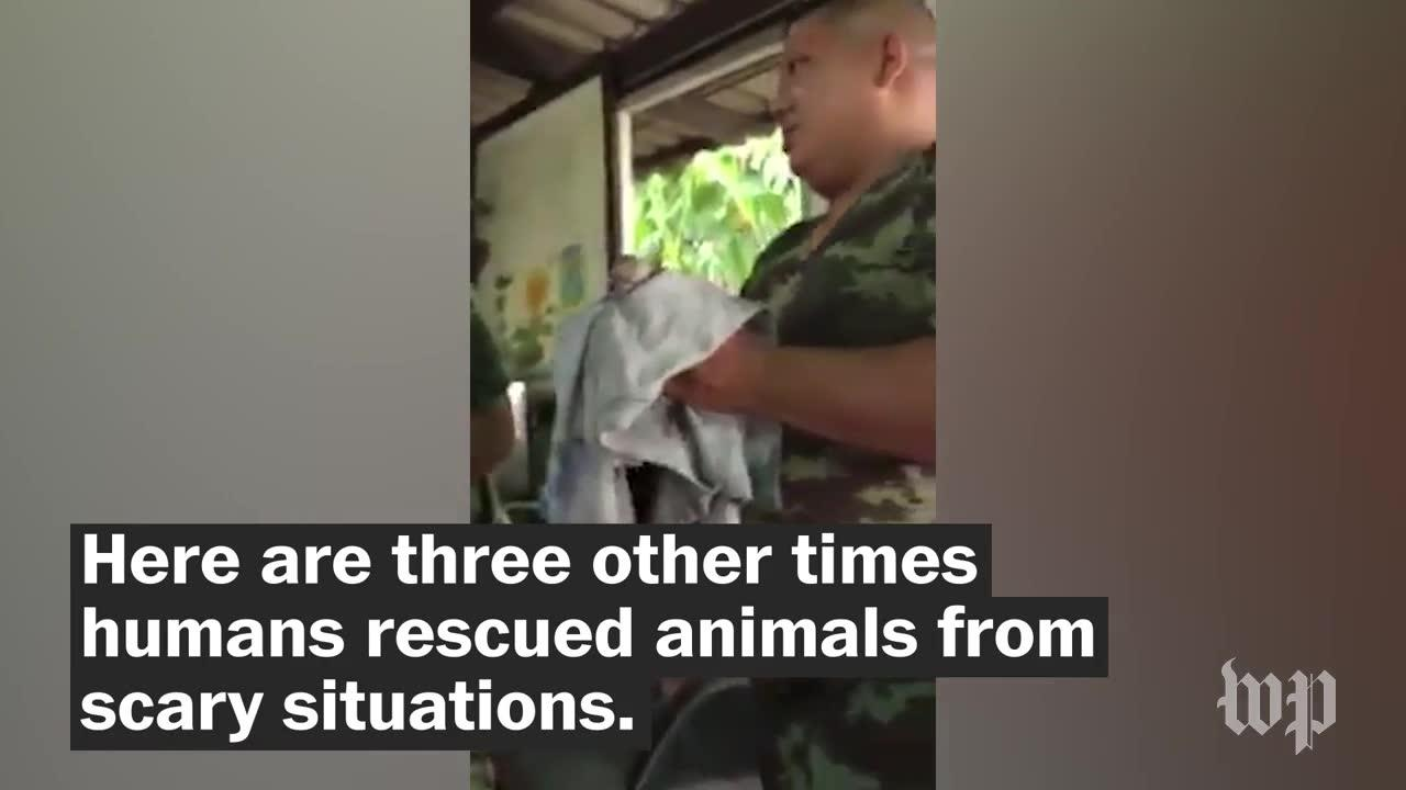 4 Times Humans Rescued Animals From Scary Situations
