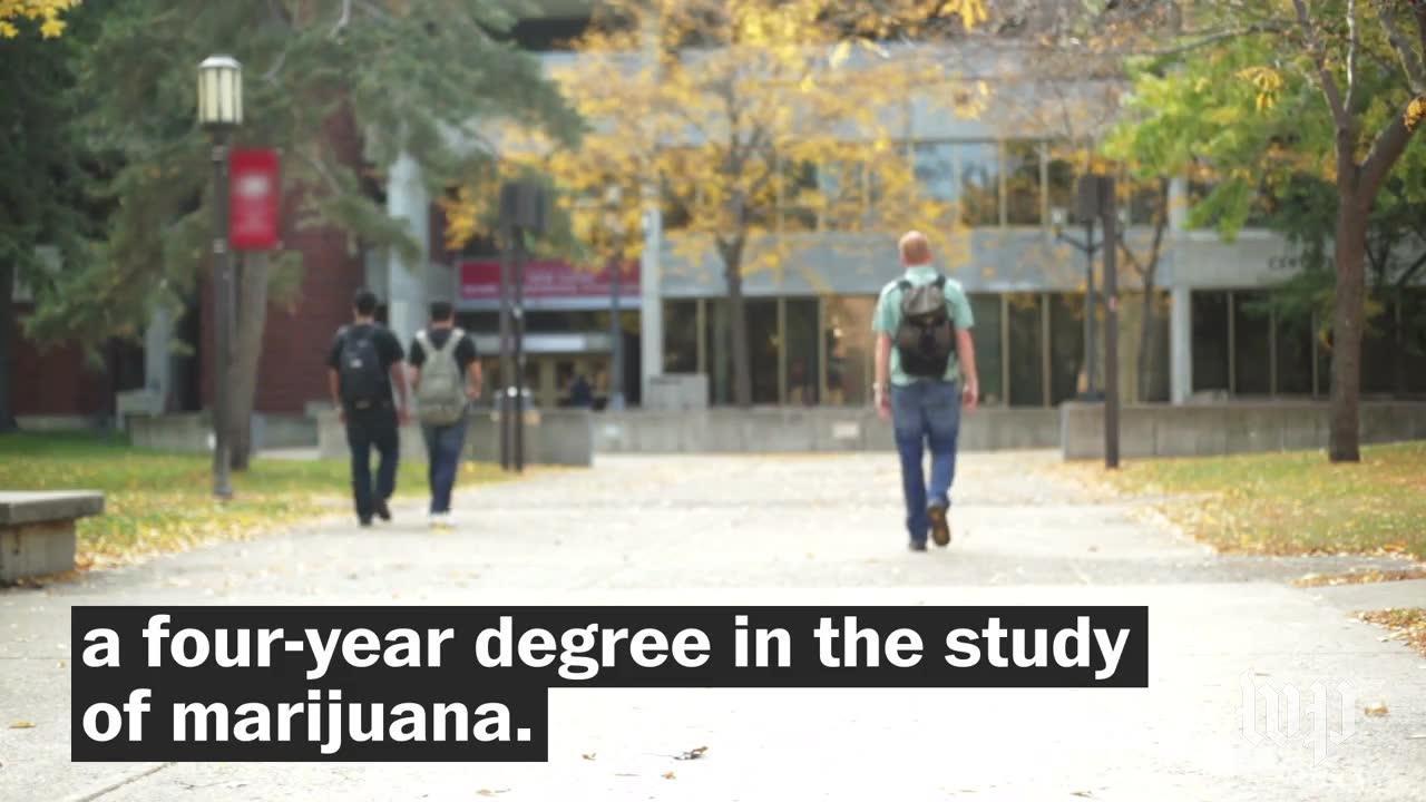 Northern Michigan University Offers First Degree In Marijuana