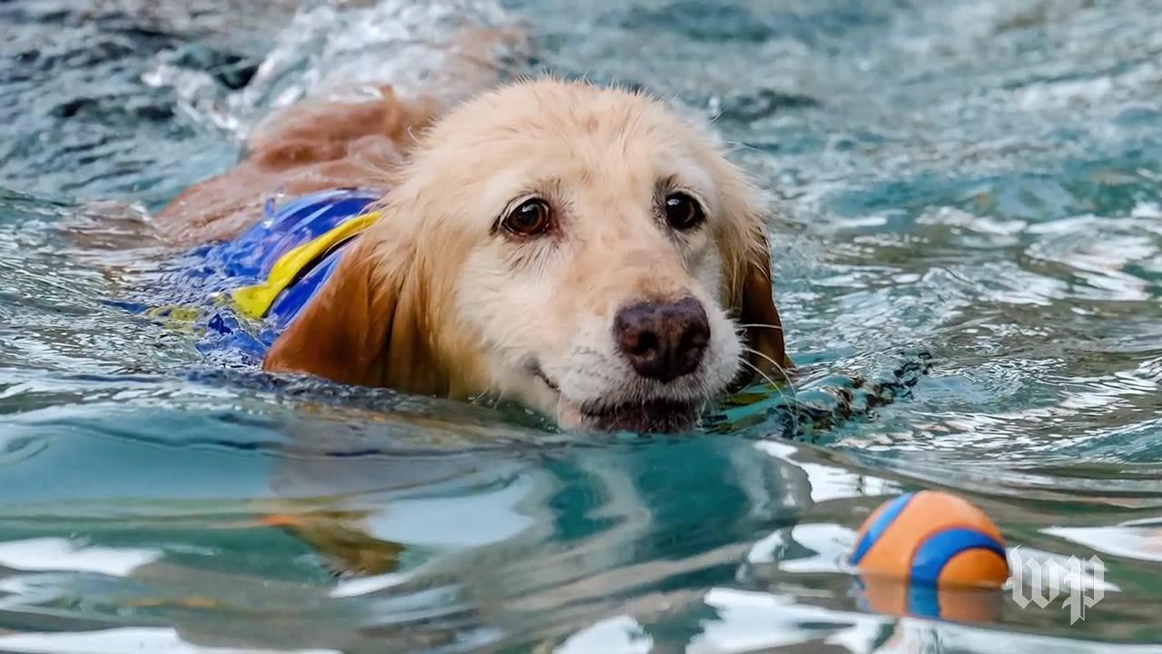 Meet Chi Chi, The Quadriplegic Dog Who'S Internet Famous